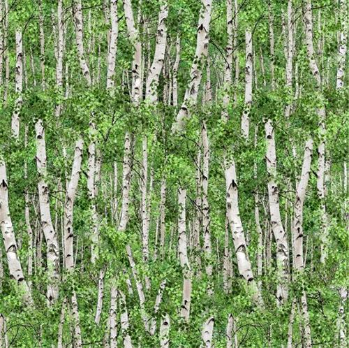 Trees, Birch or Aspen Tree with Green Leaves Cotton Fabric by Elizabeth's Studio and available at Colorado Creations Quilting