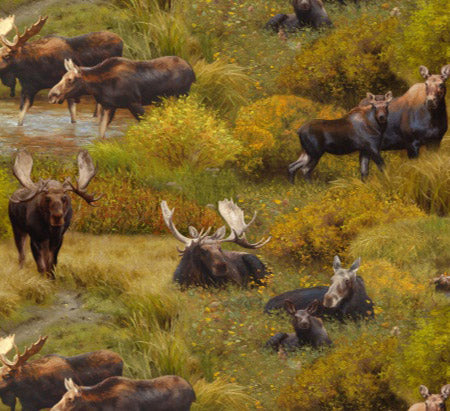 brown moose among streams and meadows cotton fabric available at Colorado Creations Quilting