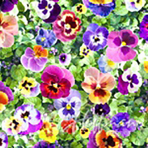 multi-colored pansies on bed of green leaves fabric available at Colorado Creations Quilting