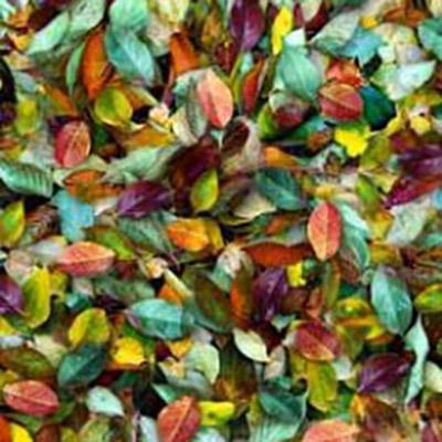 Packed leaves in shades of violet, orange, gold, green, pink