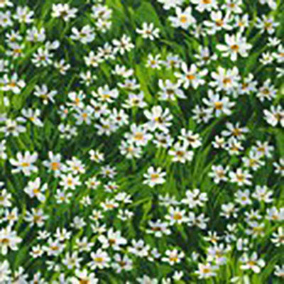 green meadow of white daisies available at Colorado Creations Quilting
