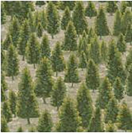 Evergreen trees on a gray background cotton fabric.  Available at Colorado Creations Quilting