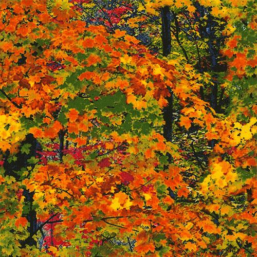 Packed fall-colored leaves in rich shades of green, red, orange and yellow