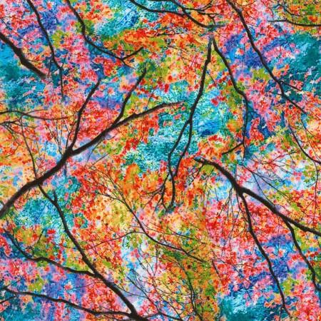 Bright Colorful Leaves  in a Blue Sky