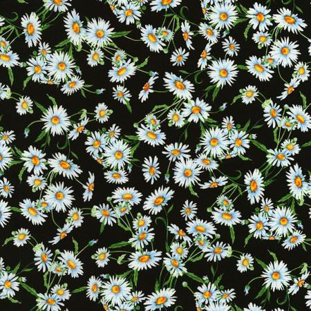 Packed white daisies on a black background