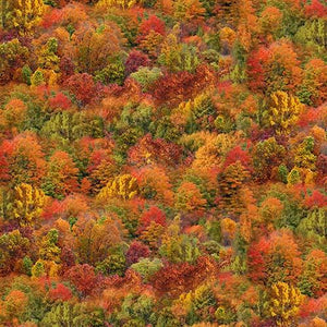 Autumn trees in red, gold, rust, green cotton fabric.