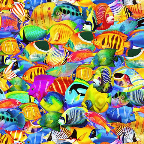 Images of brightly-colored tropical fish