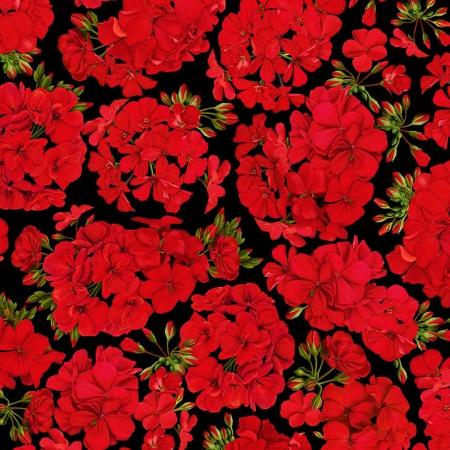 Red Geraniums on a black background