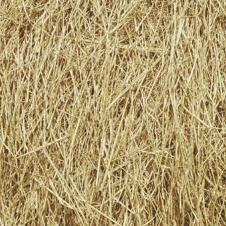 gold grass cotton fabric available at Colorado Creatioins Quilting