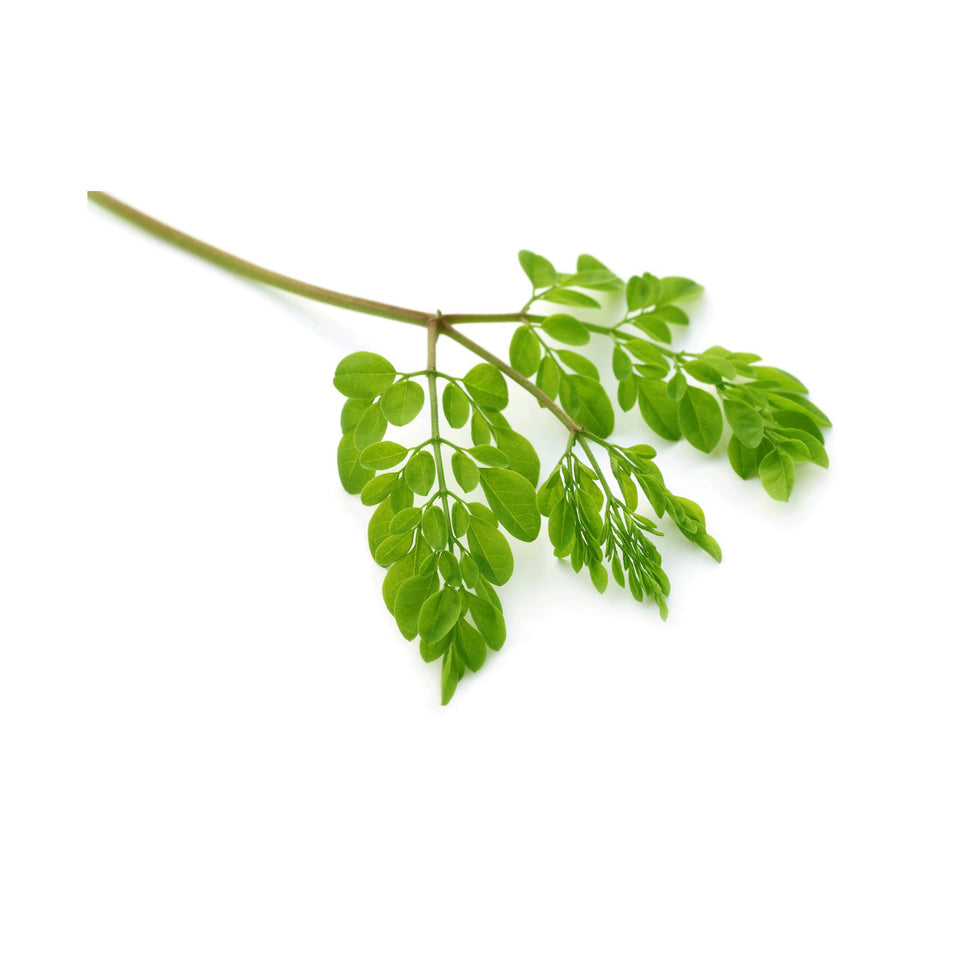 Moringa Products - Tree of Life-This Health
