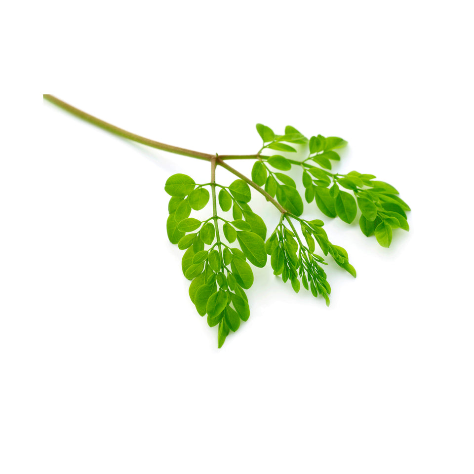Moringa Loose Tea - This Health