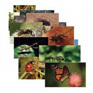 Stages Learning Materials Insects 14 Poster Cards