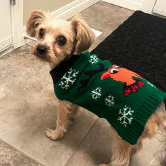 Ralph the Yorkie size small
