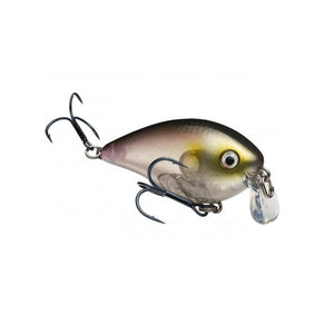 Clearwater Minnow