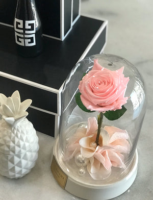 Mini Dome w/ Single Rose - White Base