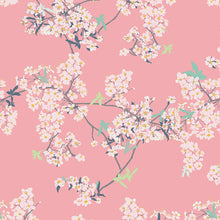 Chickadee Cover All Yinghua Cherry Blossoms on Pink