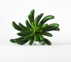 Succulent, Artificial | Rubies Inc., Chatham, Ontario, Canada