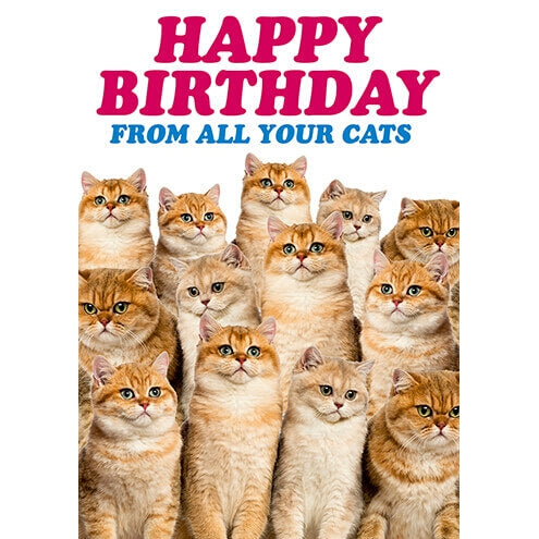 Happy Birthday From Your Cats from Dean Morris
