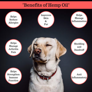Hemp Oil For Dogs and Cats - Bacon Flavor – Hempire Pets