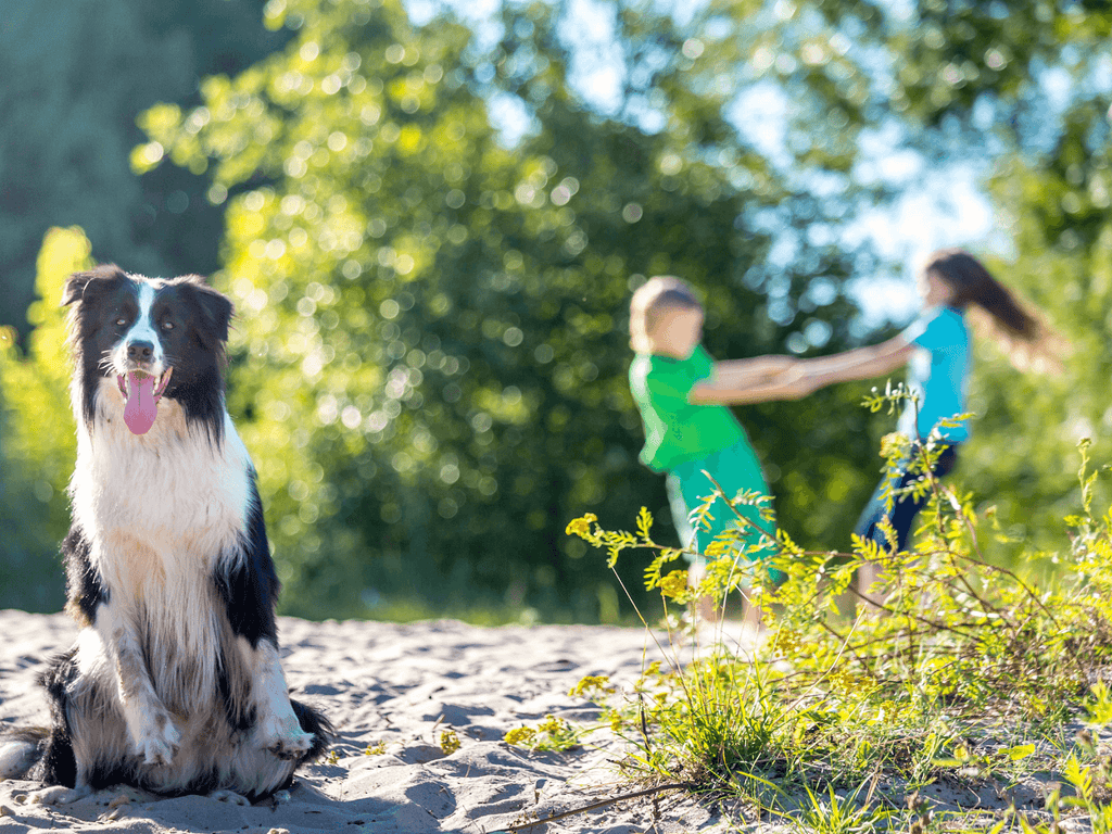 Top 9 Dog Breeds For Families
