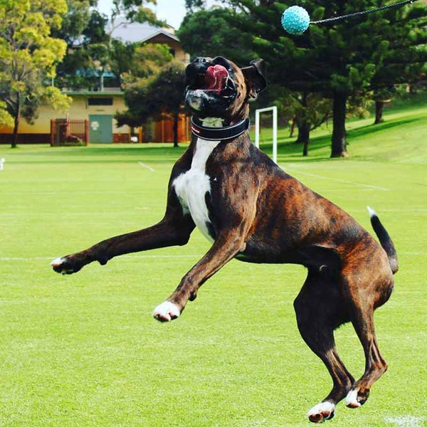 Aussie Dog Long Ball