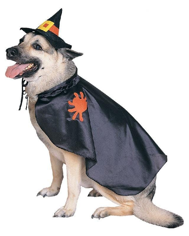Witch Pet Costume