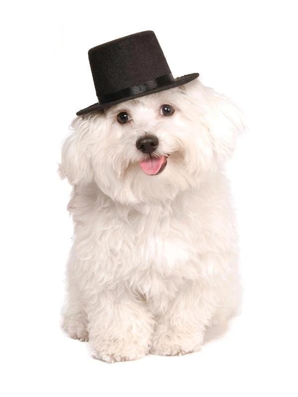 Pet Top Hat