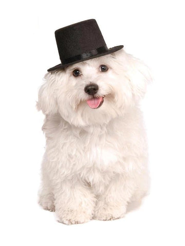 Image of Pet Top Hat