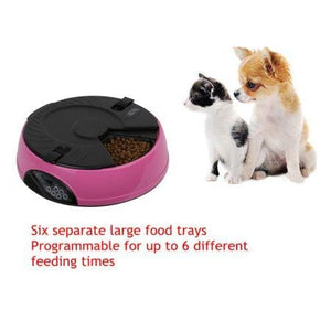 6 Compartment Programmable Pet Feeder with Recordable Message and Built-In Microphone Fuchsia