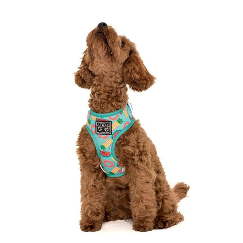 Image of Big-Little-Dogs-Adjustable-Dog-Harness-A-Splashing-Good-Time-Chino
