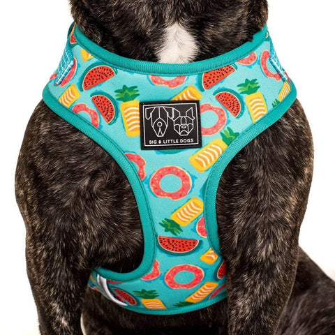 Image of Big-Little-Dogs-Adjustable-Dog-Harness-A-Splashing-Good-Time-Close-Up