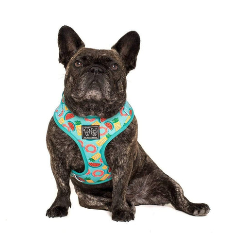 Image of Big-Little-Dogs-Adjustable-Dog-Harness-A-Splashing-Good-Time-Toby