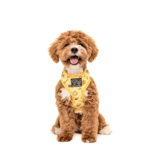 Image of Big-Little-Dogs-djustable-Dog-Harness-Bee-Hiving-Harvey-1