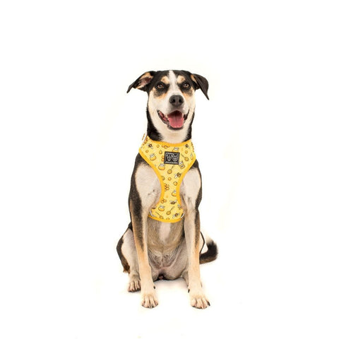 Image of Big-Little-Dogs-Adjustable-Dog-Harness-Bee-Hiving-Luna-2