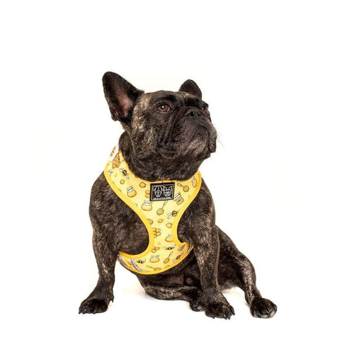 Image of Big-Little-Dogs-Adjustable-Dog-Harness-Bee-Hiving-Toby-2