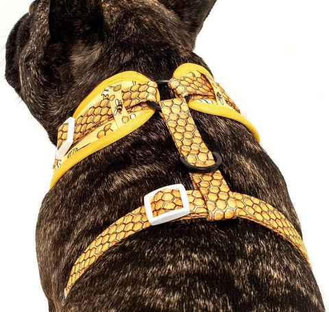 Image of Big-Little-Dogs-Adjustable-Dog-Harness-Bee-Hiving-Toby-5