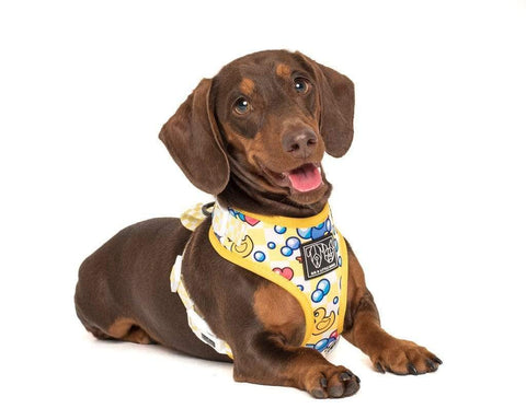 Image of Big-Little-Dogs-Adjustable-Dog-Harness-Rubber-Ducky-Rupert-2