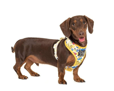 Image of Big-Little-Dogs-Adjustable-Dog-Harness-Rubber-Ducky-Rupert