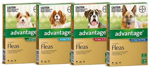 Image of Advantage Spot On Flea Treatment For DogsAfterpay ZipPay Australia Melbourne Sydney Adelaide Gold Coast