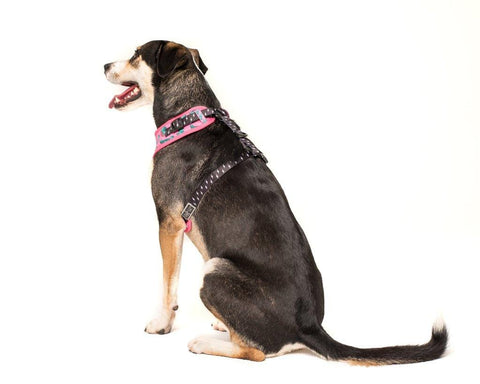 Image of Big-and-Little-Dogs-Adjustable-Dog-Harness-Princessasaurus-Back
