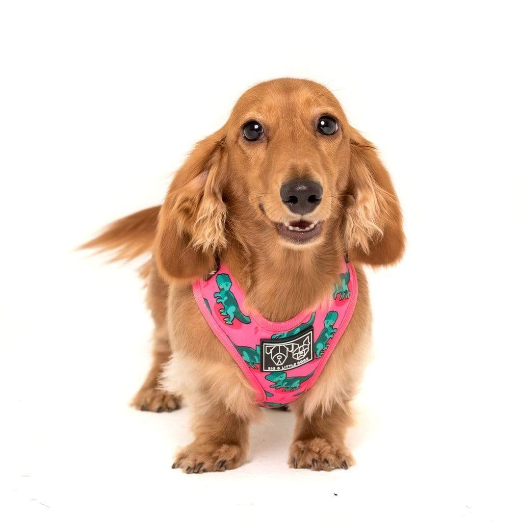 Big-and-Little-Dogs-Adjustable-Dog-Harness-Princessasaurus-Ivy