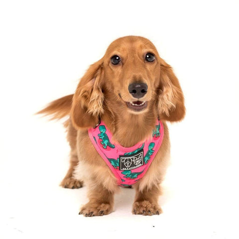 Image of Big-and-Little-Dogs-Adjustable-Dog-Harness-Princessasaurus-Ivy