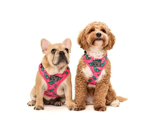 Image of Big-and-Little-Dogs-Adjustable-Dog-Harness-Princessasaurus-Lucy-and-Harvey-2
