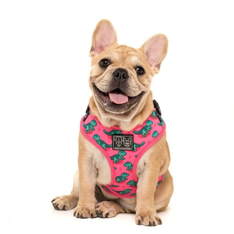 Image of Big-and-Little-Dogs-Adjustable-Dog-Harness-Princessasaurus-Lucy