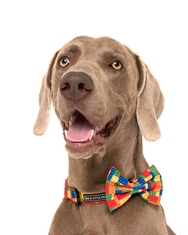 Image of Big-and-Little-Dogs-Collar-and-Bow-Tie-Blocktastic-Hank-2