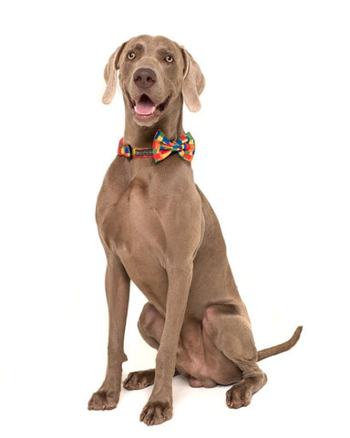 Image of Big-and-Little-Dogs-Collar-and-Bow-Tie-Blocktastic-Hank