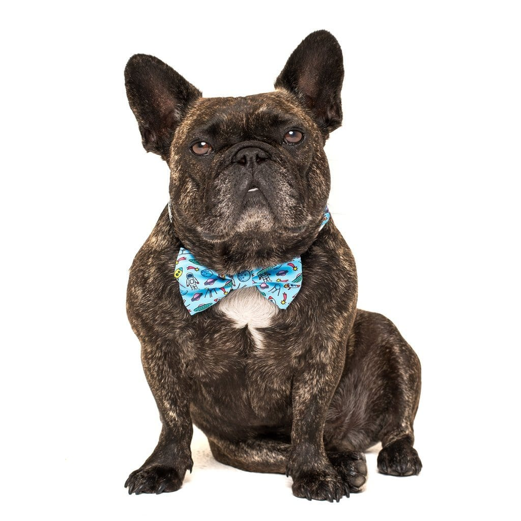 Big-and-Little-Dogs-Collar-and-Bow-Tie-Out-Of-This-World-Toby