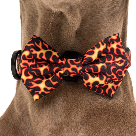 Image of Big-and-Little-Dogs-Collar-and-Bow-Tie-Too-Hot-To-Handle-Close-Up