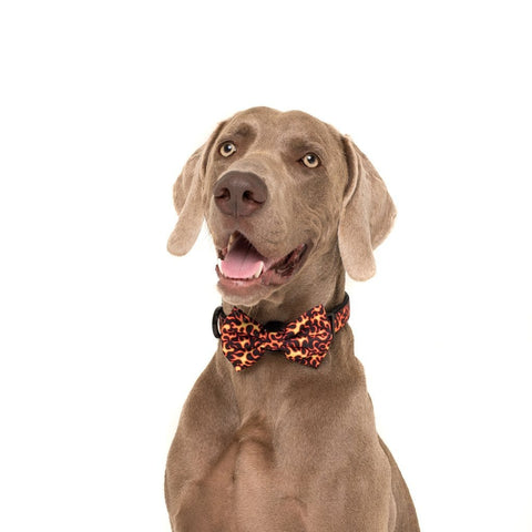 Image of Big-and-Little-Dogs-Collar-and-Bow-Tie-Too-Hot-To-Handle-Hank-2