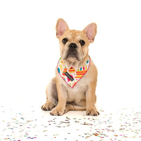Image of Big-and-Little-Dogs-Cooling-Neckerchief-Bandana-Birthday-Cake-Lucy